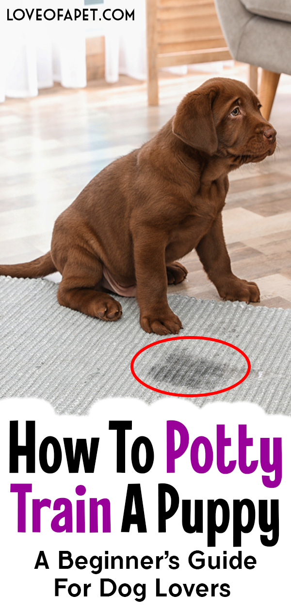 How To Potty Train A Puppy A Beginner S Guide For Dog Lovers Love Of A Pet Puppy Training Dog Training Obedience Potty Training Puppy