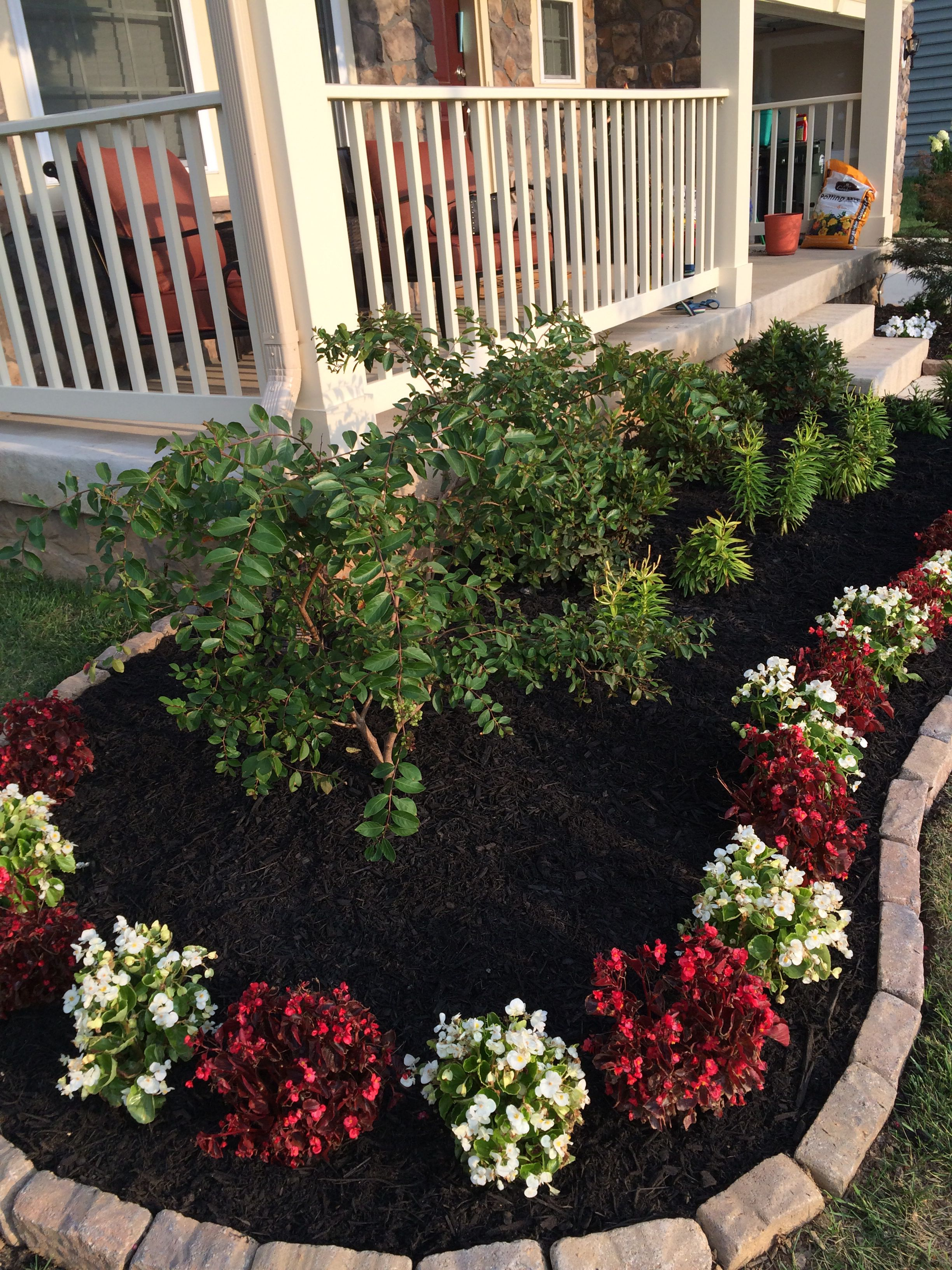 Begonias With A White Acoma Crape Myrtle Front Yard Garden Front Yard Crape Myrtle