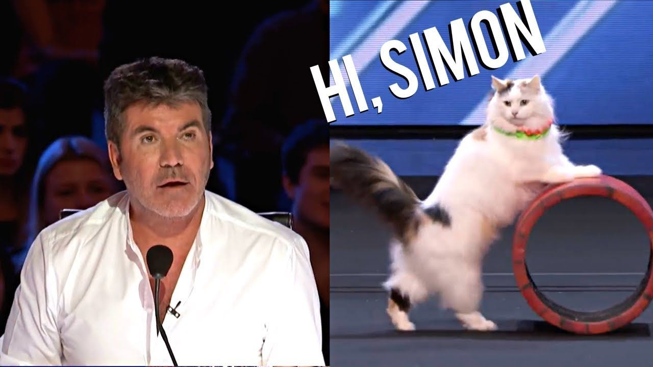 The Savitsky Cats Super Trained Cats Wows On America S Got Talent 2018 Youtube America S Got Talent Americas Got Talent Funny Cat Training