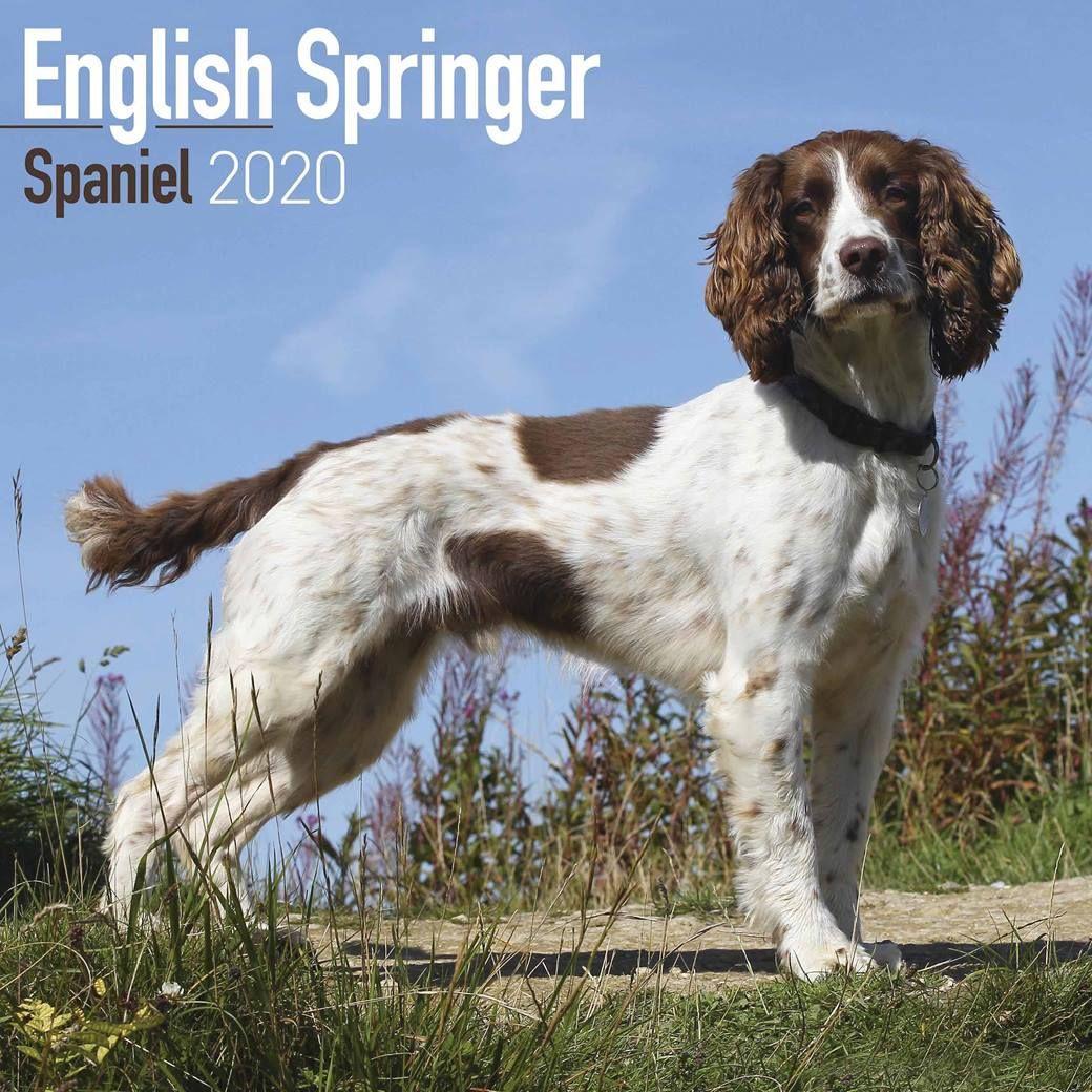 Best Dog Stuff For English Springer Spaniel English Springer Spaniel Springer Spaniel Interactive Dog Toys