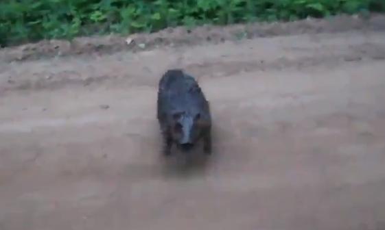 Un castoro attacca e morde a morte un uomo! E' accaduto in Bielorussia, ecco l'incredibile video: http://www.videopazzeschi.com/animali-bastardi-ecco-il-castoro-piu-cattivo-del-mondo-video/
