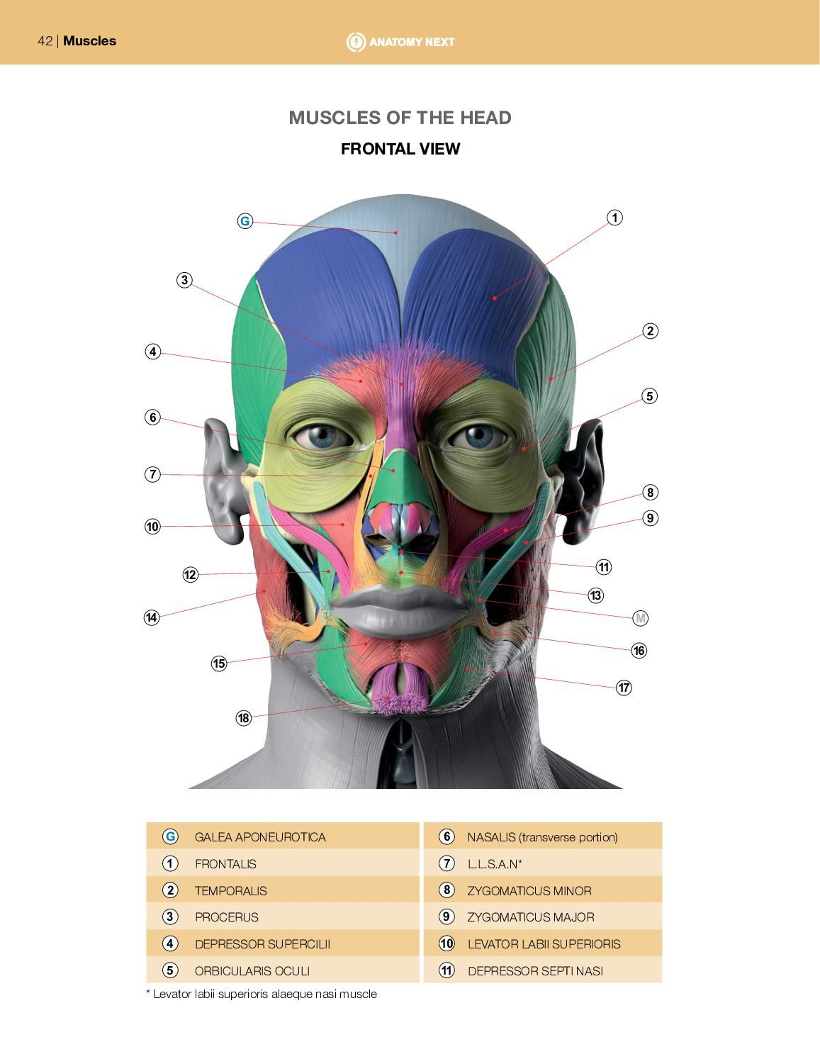 Print Anatomy Of Facial Expression In
