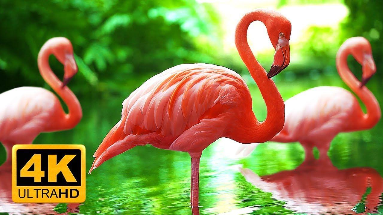 Breathtaking colors of nature in k birds u flowers sleep