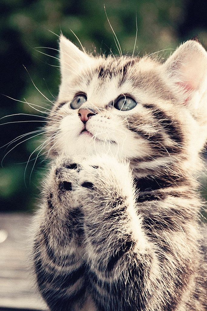 Cute Cat Kitten Poster With Images Cute Cat Wallpaper Kittens