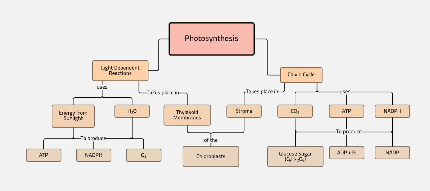 photosynthesis, the calvin cycle, light dependent reactions. review
