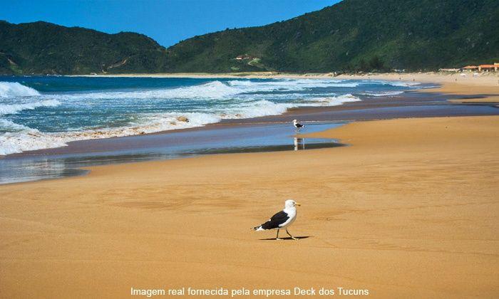Conheça as famosas praias de Búzios: Geribá, João Fernandes, Ferradura, Ferradurinha, Rasa, Manguinhos, Tartaruga, Brava e Olho-de-Boi