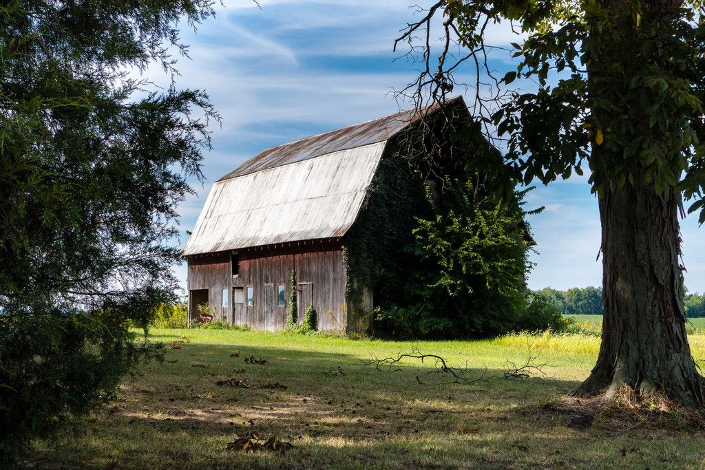 Red Barn and Vines | Old barns, Barn, Red barn