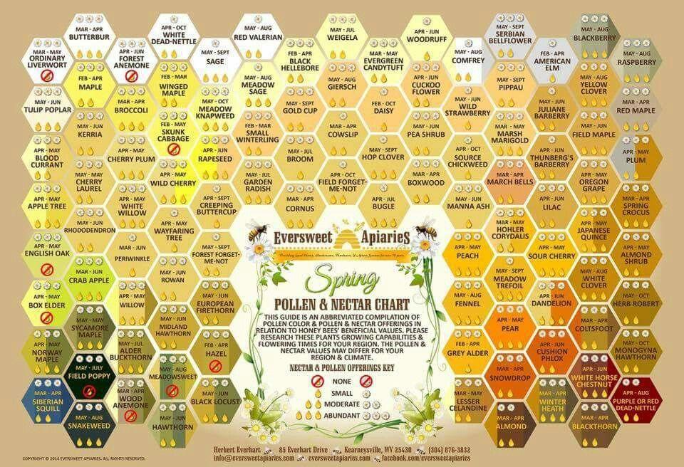 Pin by Nancy Evans on Garden Honey bee pollen, Bee