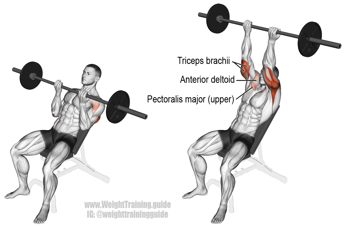 Incline reverse grip barbell bench press. A compound push ...