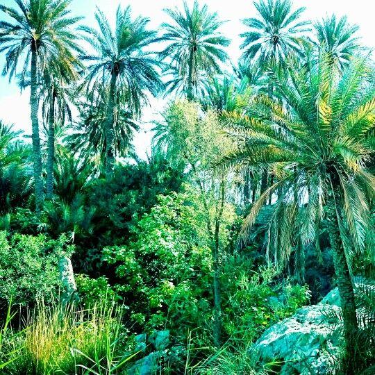 Sumail   OMAN | saif alramadhani سيف الرمضاني | Plant leaves