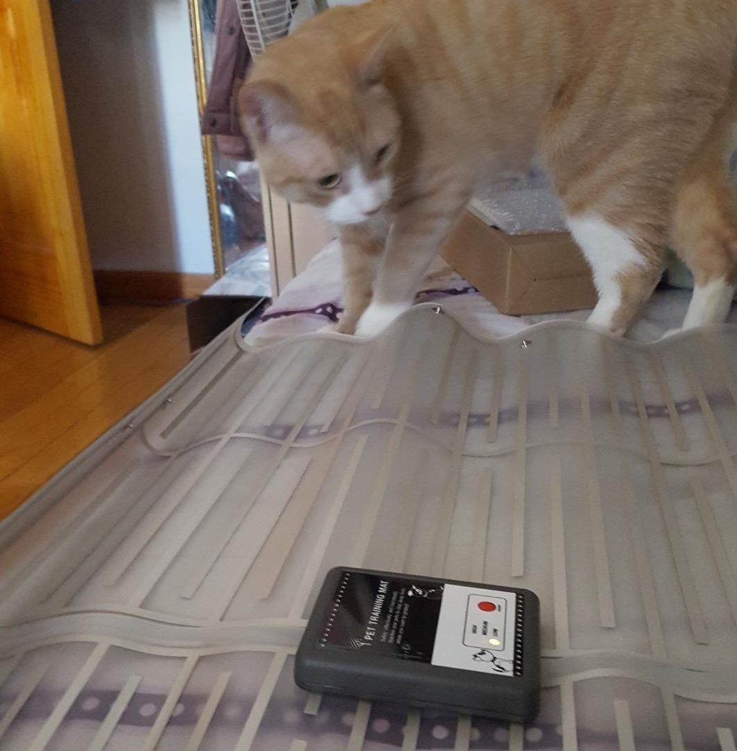 Pettrainingmat Cat Petproduct Cute Pet Training Cat Mat Couch