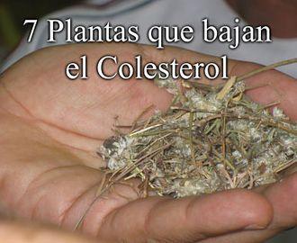 7 Plantas que bajan el Colesterol