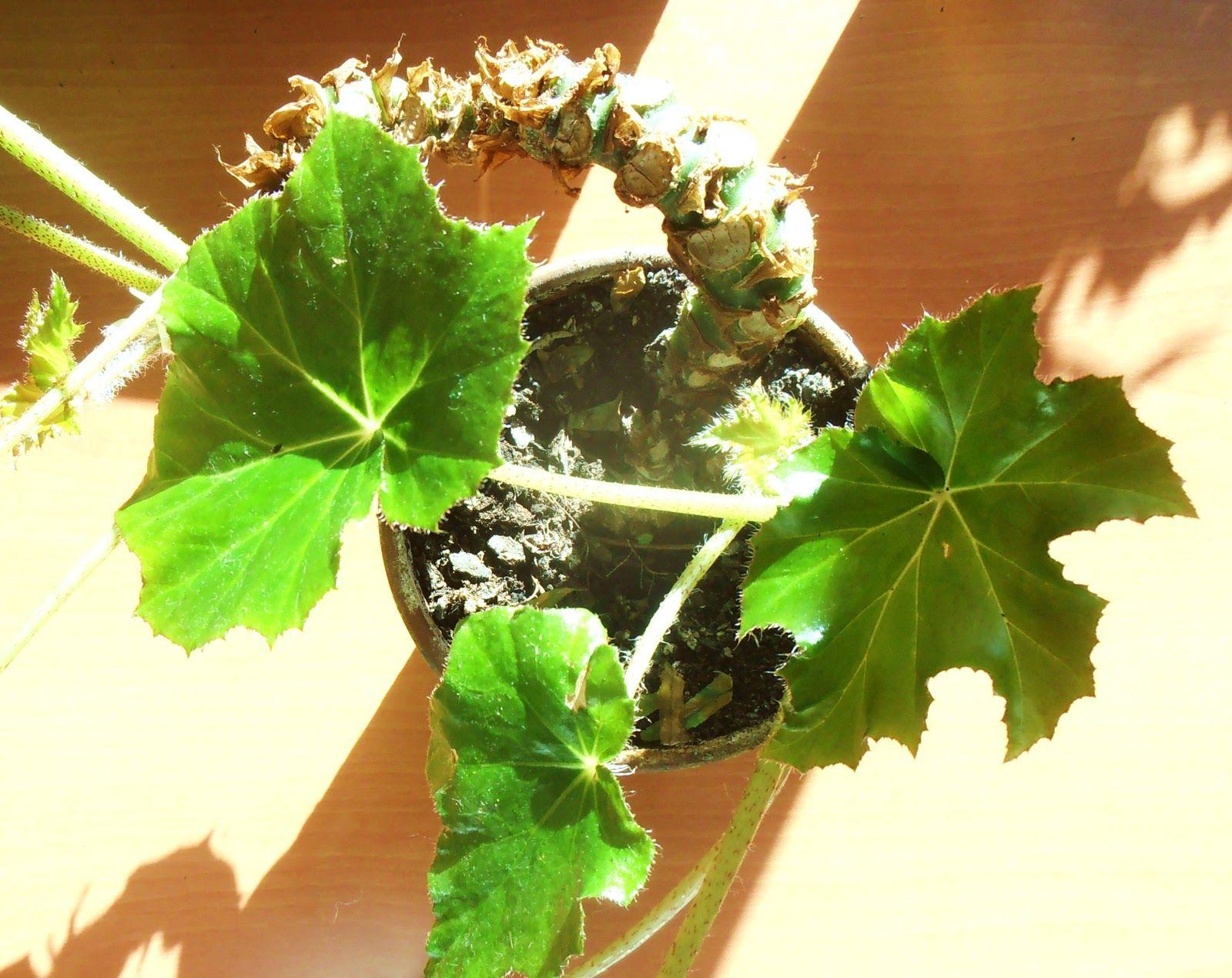La ventana de javiruli plantas de interior 5 cuidados - Cuidado de plantas de interior ...