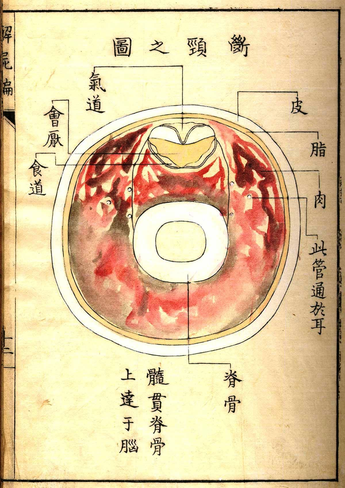Images from Kaishi Hen (Analysis of Cadavers), an anatomical atlas ...