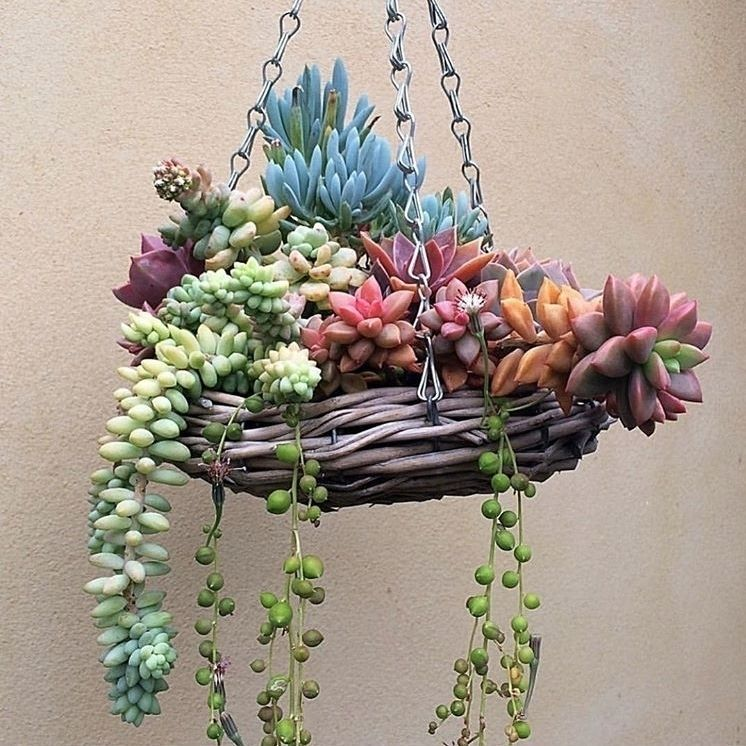 Swooning over this hanging succulent planter by contrivecreations  can we have two please