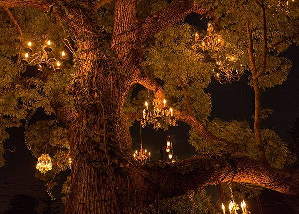 The Chandelier Tree of Silver Lake, Los Angeles | Los Angeles ...