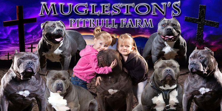 Pin On Pitt Bulls Passion