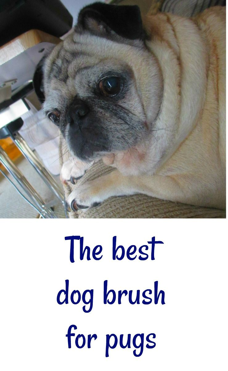 The Best Dog Brush For Pugs And Why We Stopped Using The