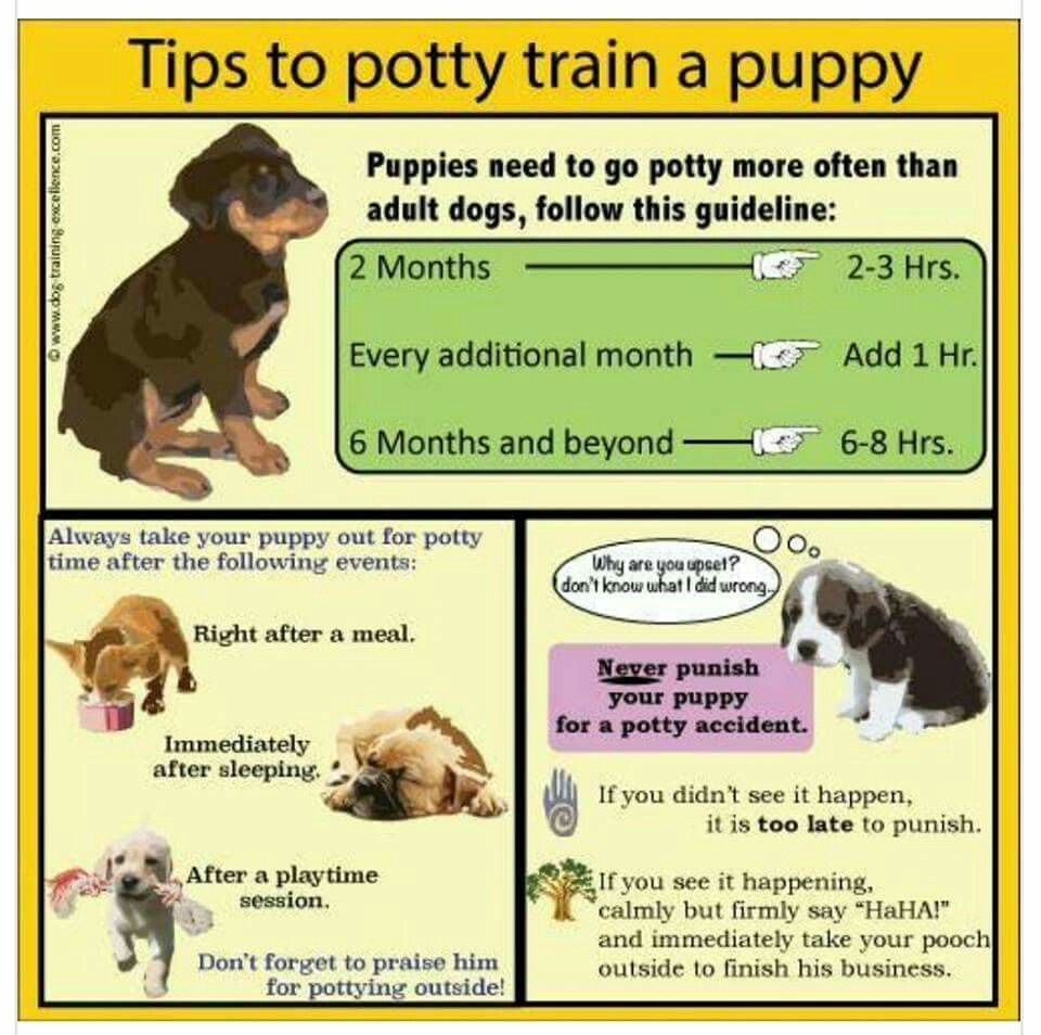 Pin By Crystal Batey On Interesting Stuff Potty Training Puppy