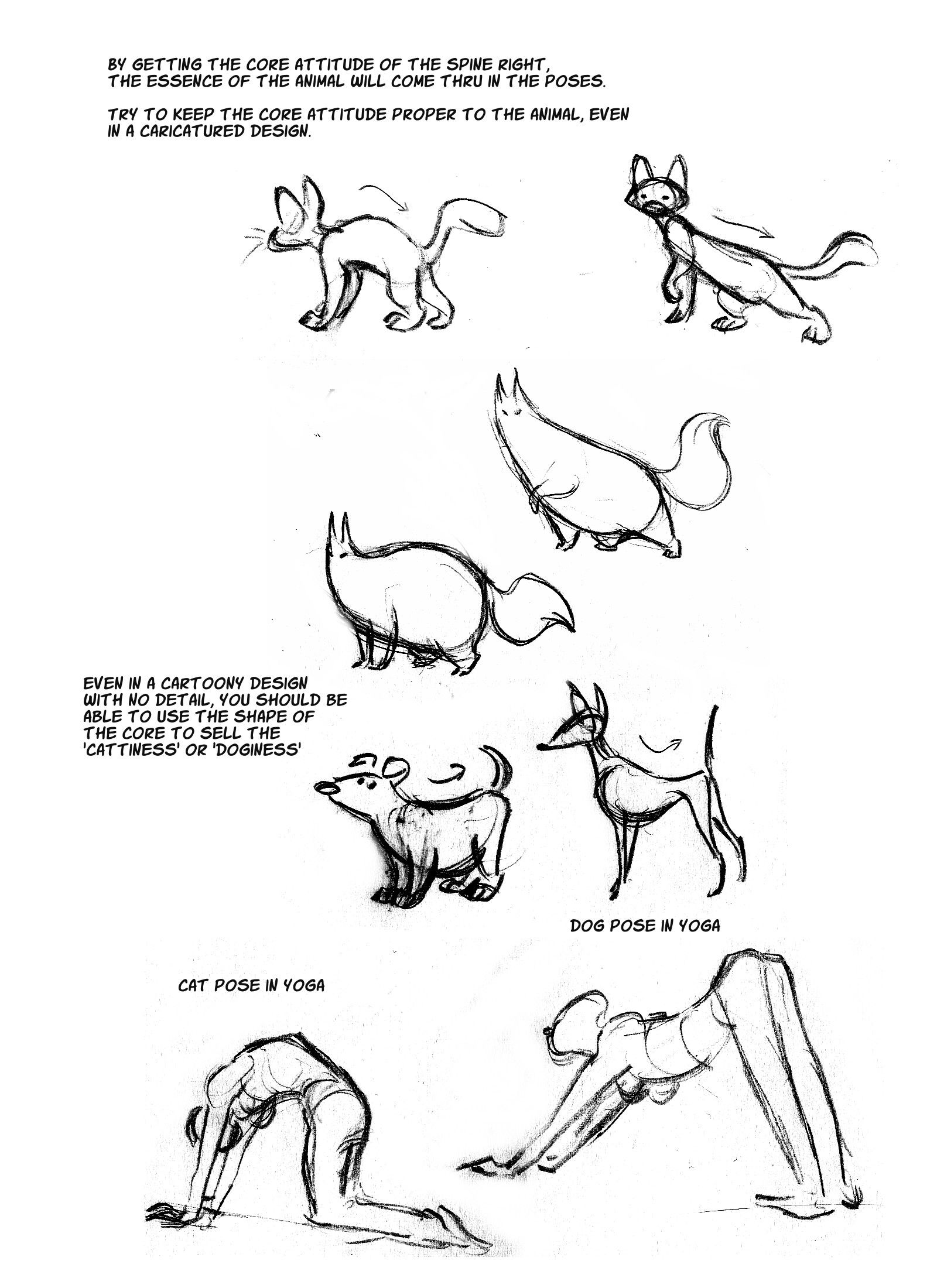 Cat Anatomy Notes– The Spine : sydneypadua.com | How to Draw ...