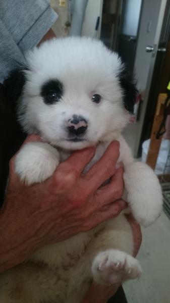 ありがとうございます 白 山口県 犬の里親募集 111414 ペットのおうち 月間利用者150万人 里親 犬 うさぎ 赤ちゃん