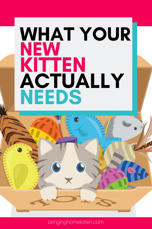 Kitten Supplies In 2020 Kitten Supplies Kitten Getting A Kitten