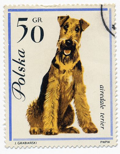 Adorable Airedale Postage- By Alex Jacque.