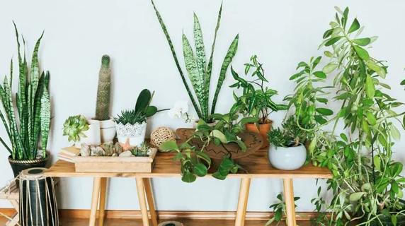 Buy Indoor Plants Online Usa