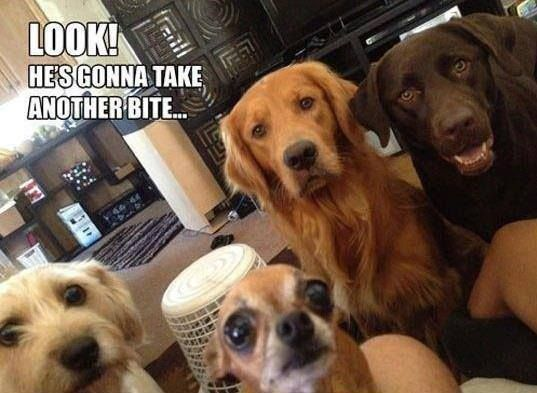Image result for dogs watching me eat