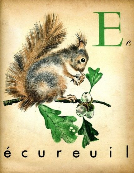 Vintage French Alphabet Print Squirrel From The Interrupting Lion More On My Blog Here Squirrel Illustration Squirrel French Alphabet