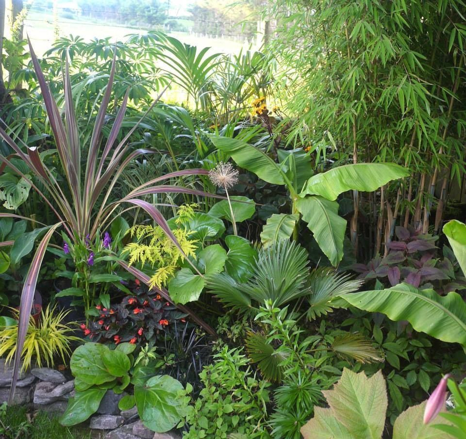 A Beautiful Tropical Plant Combination. The Cordyline Is