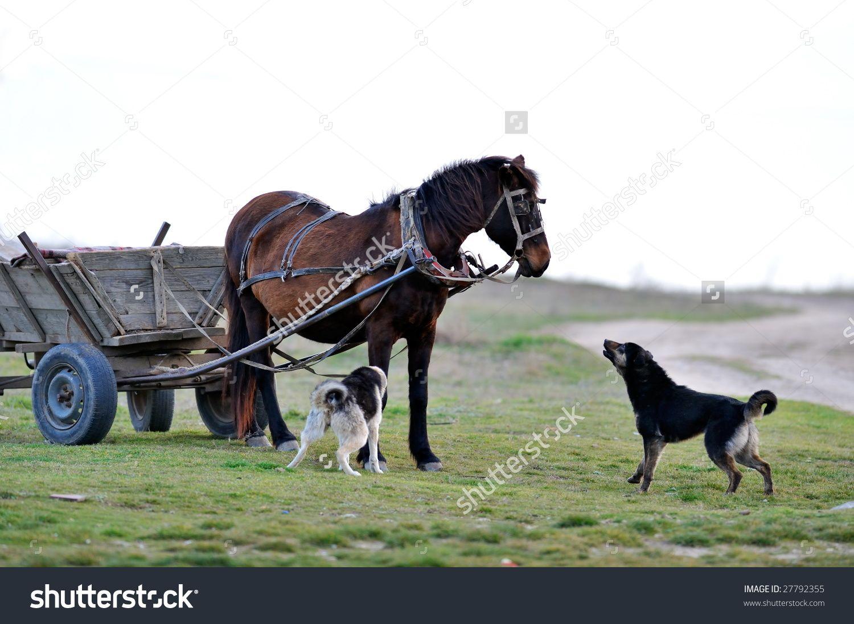 Horse And Barking Dog