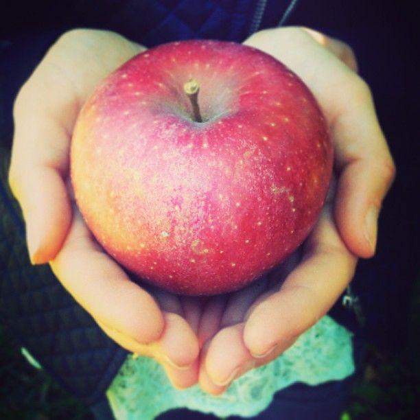 #ApplePicking #LovingFall #Photography