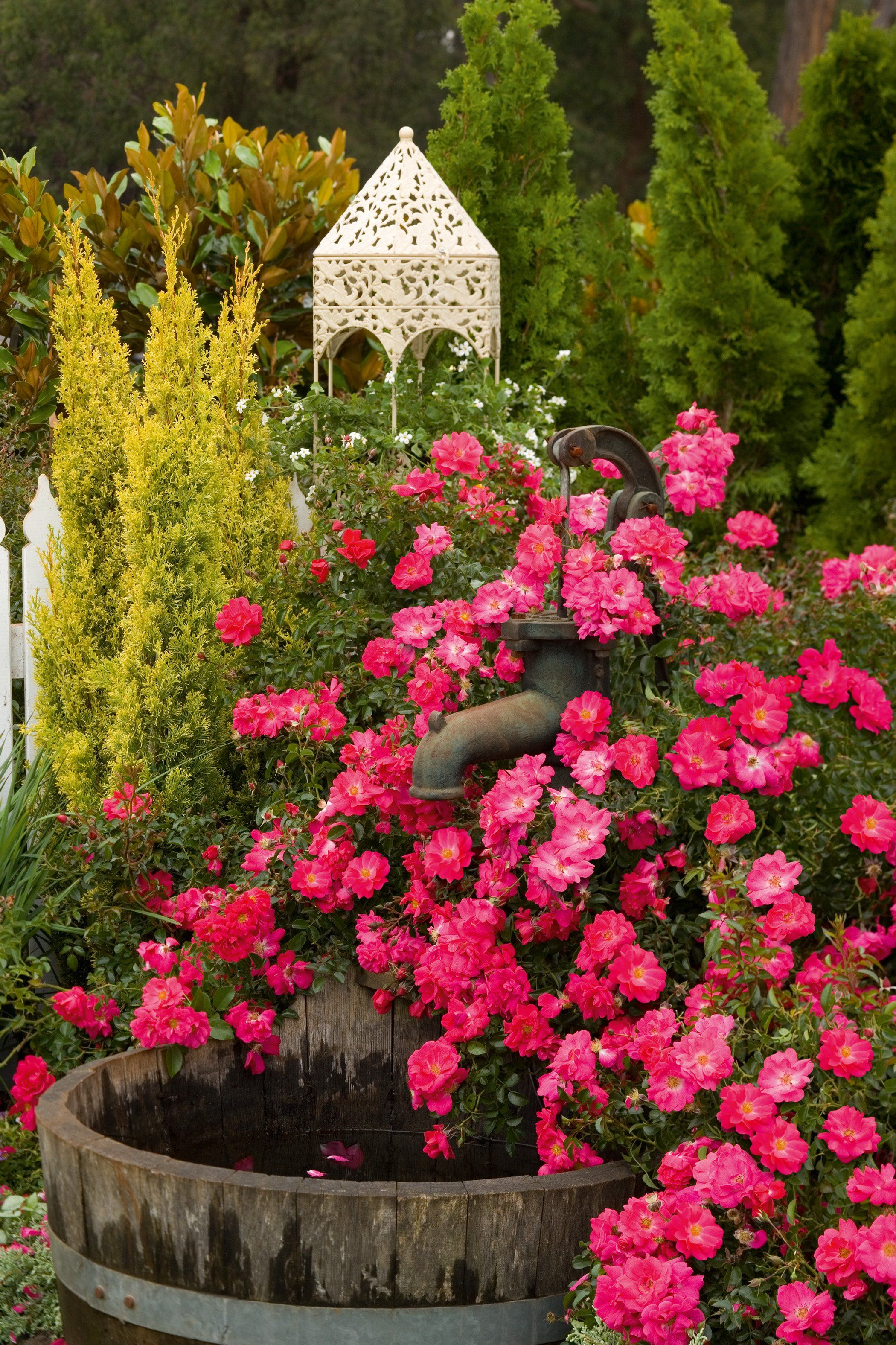 Roses In Garden: Flower Carpet® Pink Supreme Ground Cover Rose Rosa X