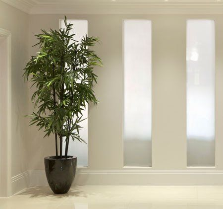 Black Bamboo | Fast growing, Black bamboo and Growing tree