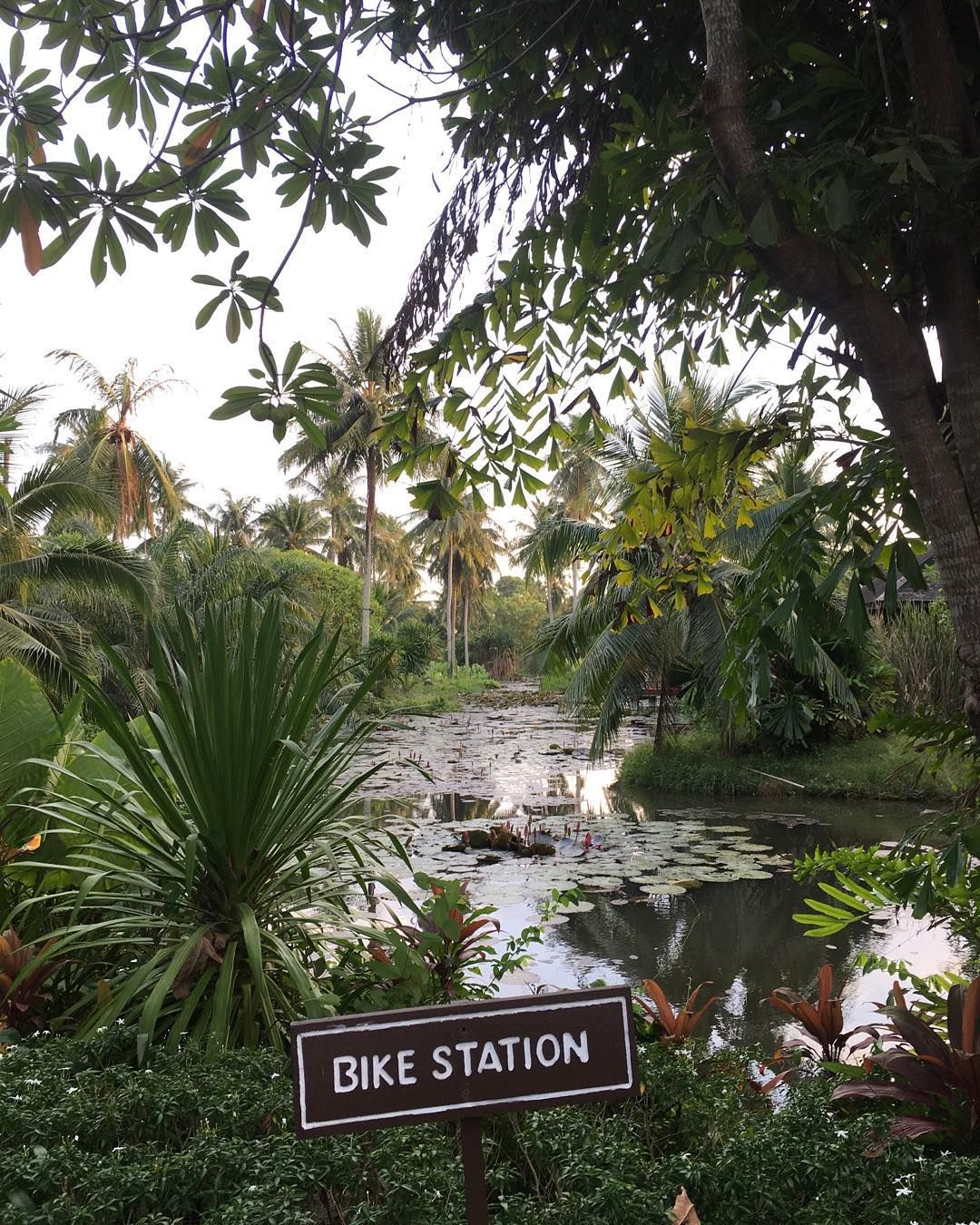 Bike station in the jungle