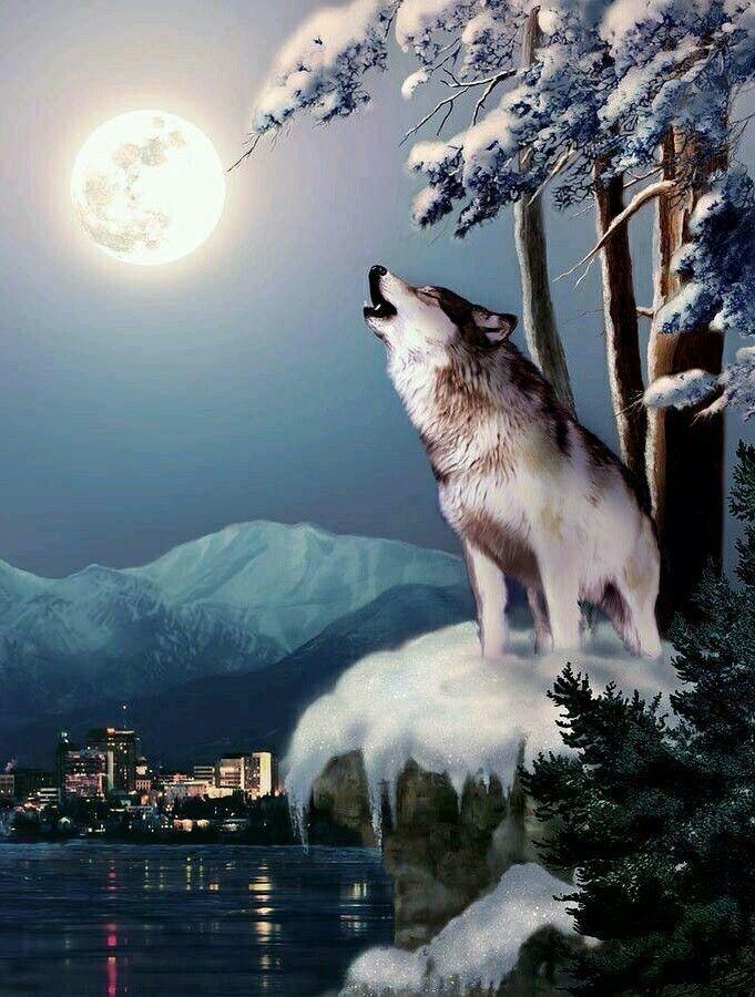 Aullando A La Luna Wolves T Lobos Lobo Dibujo Y