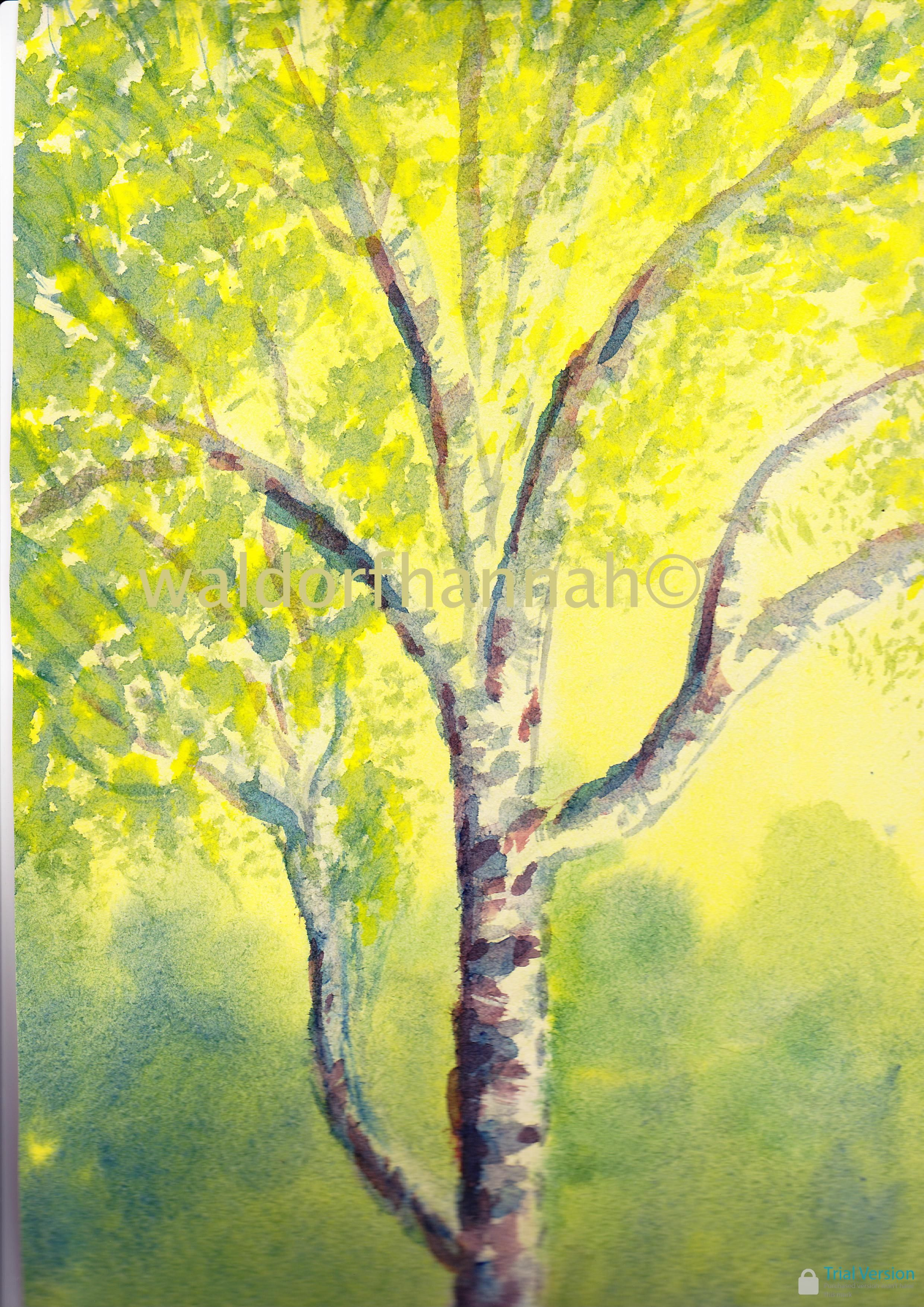 silver birch painting