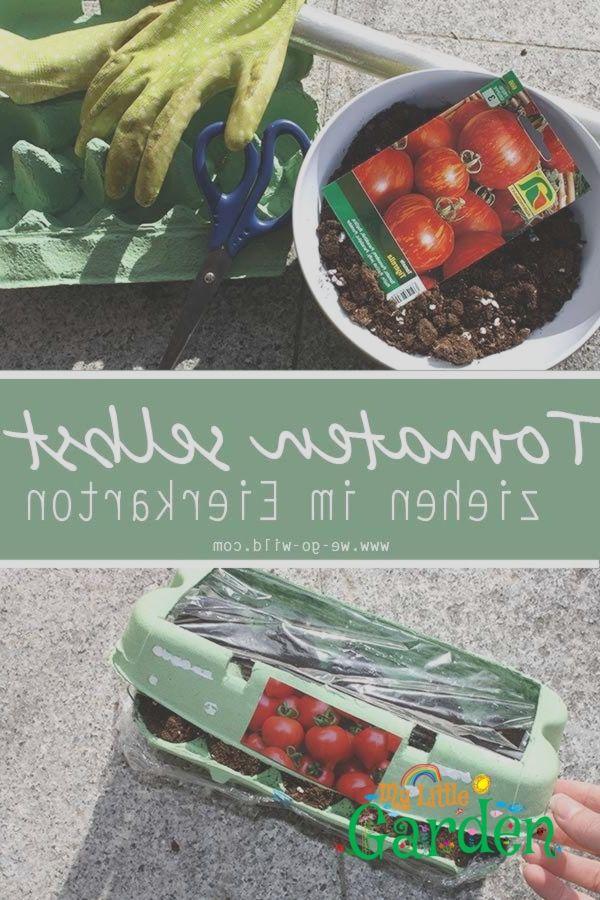 Tomaten selber ziehen im Eierkarton Gewächshaus #tomatenpflanzen