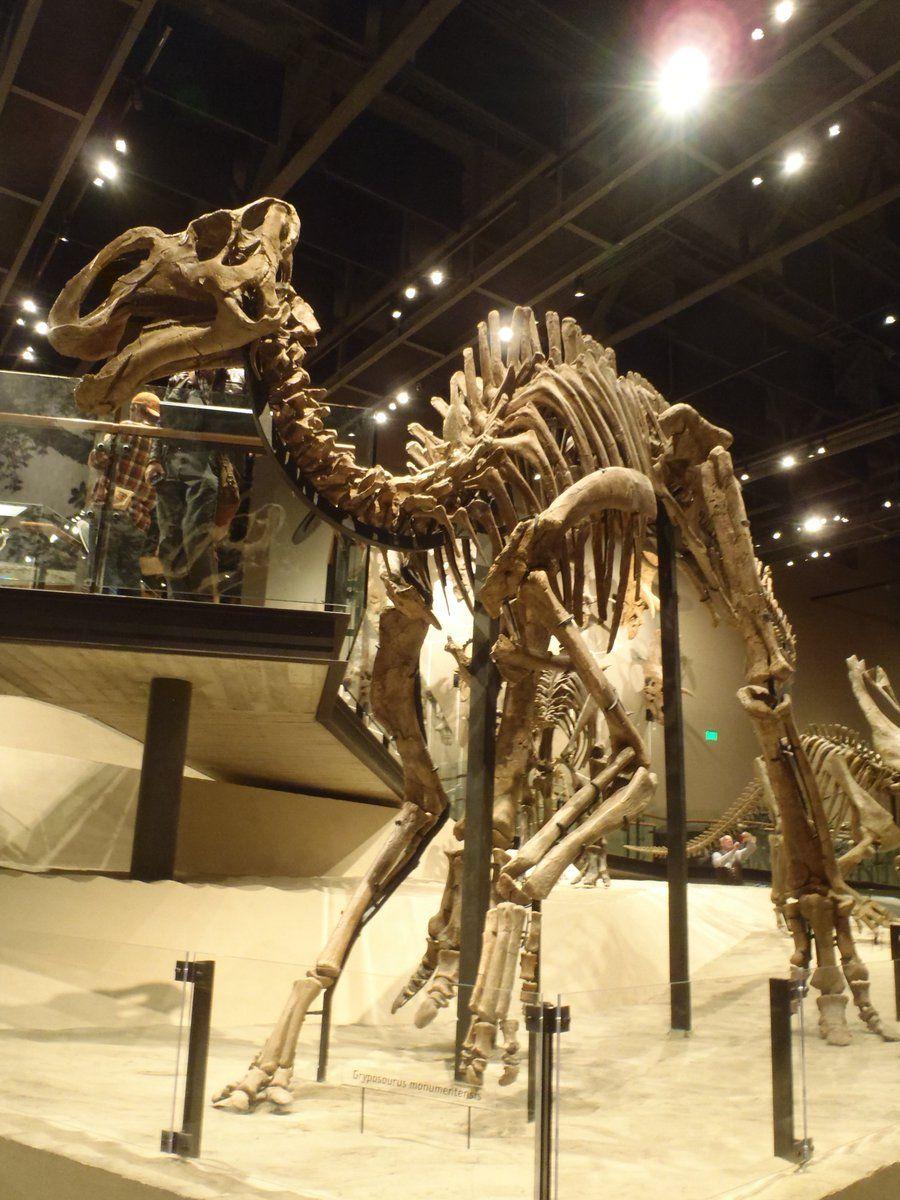 Gryposaurus monumentensis.