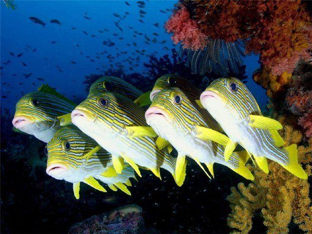 N\'Tank - first boy (tropical fish) band