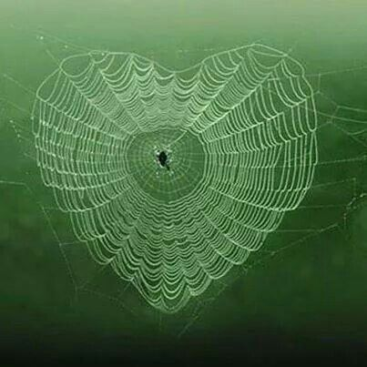Heart shaped spiders web