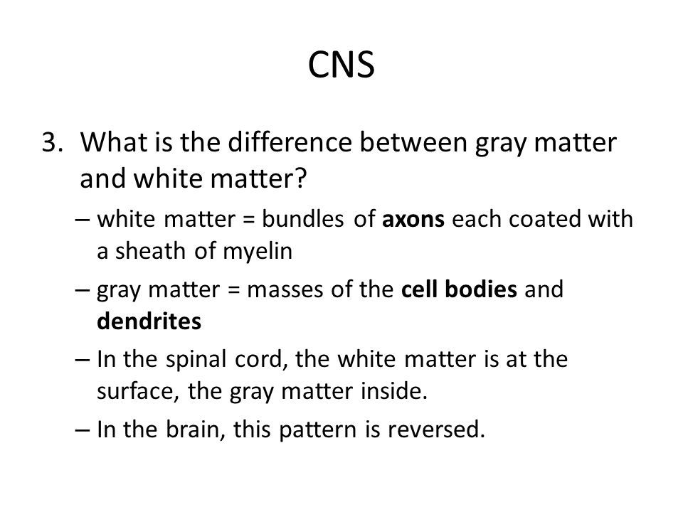 white matter and grey matter difference - Google Search