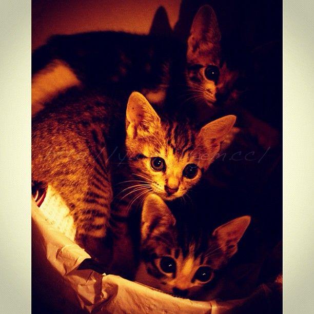 今日は最後までタイミングが悪い日でした それにしても早起きすると1日が長い 笑 サッカーを横目で見ながらすでに眠いですヽ O 写真はにゃんずが少しずつ好き放題し始めた頃 お気に入りのごみ箱にて Cat Kitty Kitten ねこ 猫 子猫 ねこ部 Neko Yur