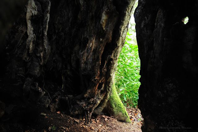 Art & Sound Healing Dublin - Samara Tenzin : ...PHOTOGRAPHY....