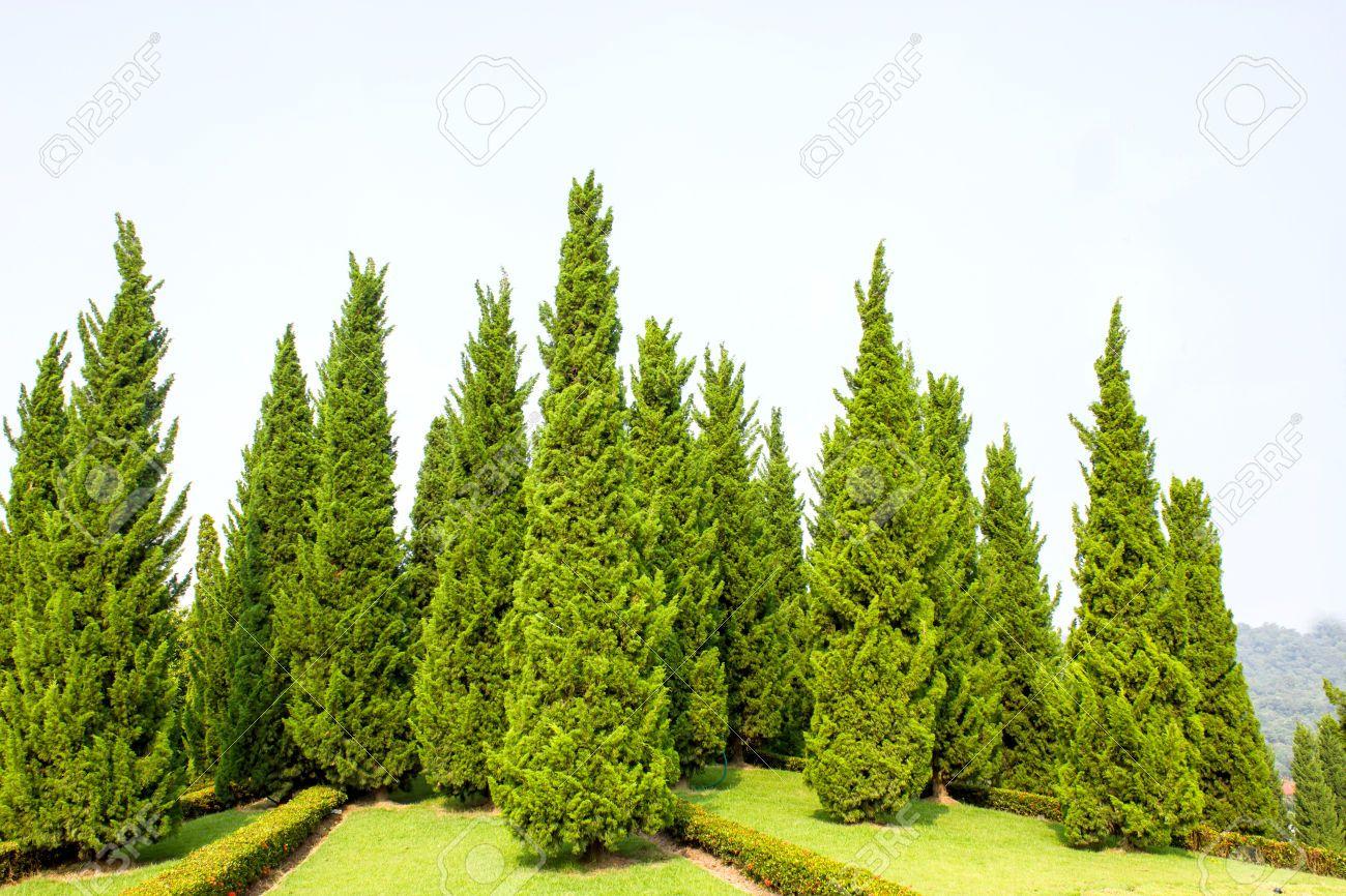 pinetree garden - Google 검색