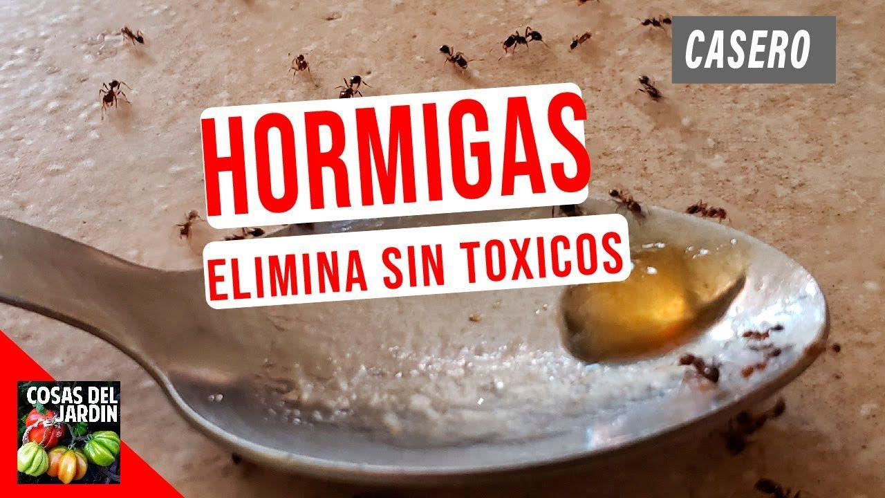 Como Acabar Con Las Hormigas En Mi Cocina Como Eliminar Hormigas Dentro De La Casa Casero Y Sin Toxicos