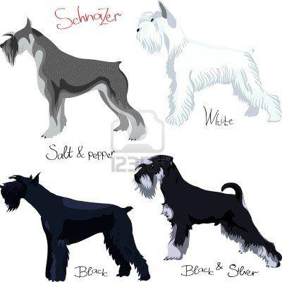 Stock Vector Schnauzer Breed Schnauzer Puppy Schnauzer Dogs