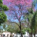 Árboles Nativos de Argentina   Plantas & Jardín
