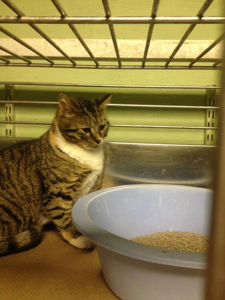 LEONA HAS BEEN RESCUED BY CAT ADOPTION TEAM, WILMINGTON, FOR FOSTER CARE
